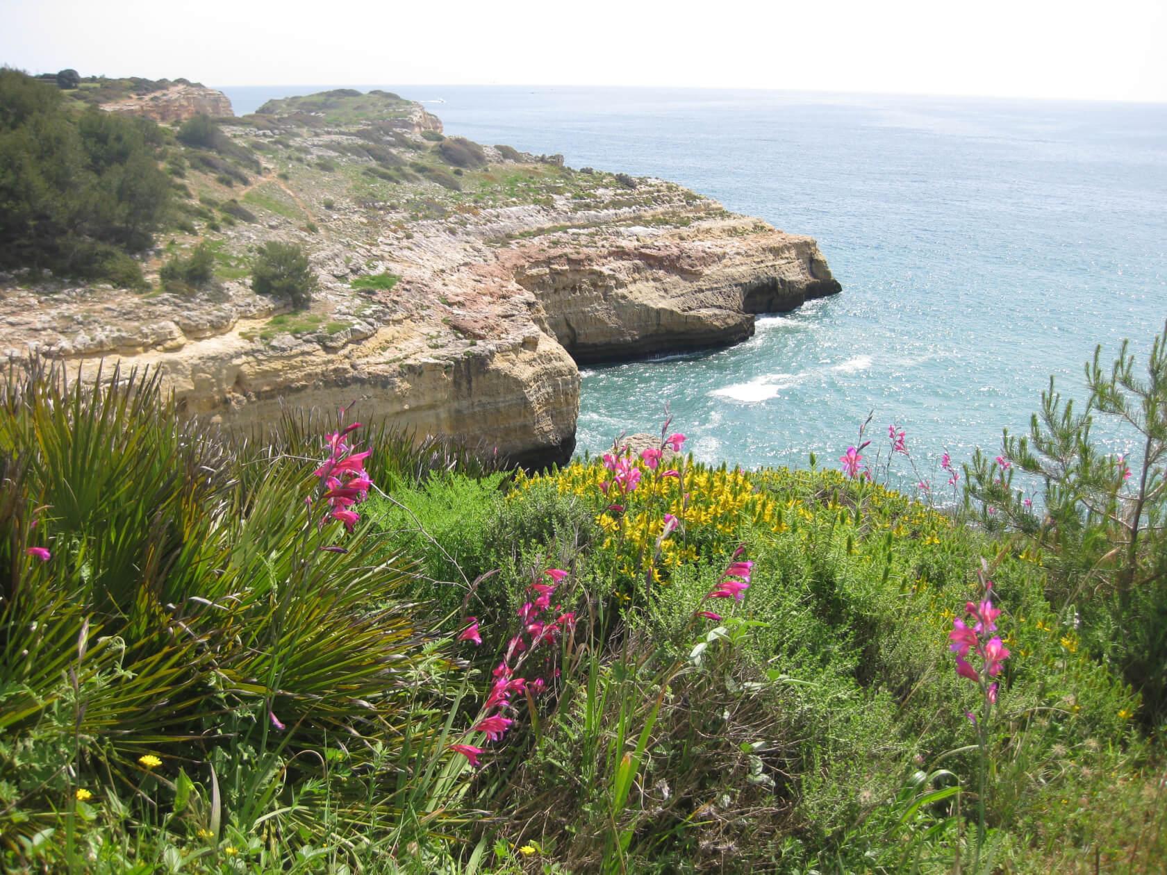 Blüten vor Meer und Felsenküste