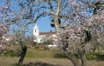 YOGA-Mandelblütenwoche